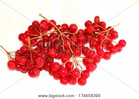Viburnum.Viburnum red bitter but useful. It is used for colds,with pain in the heart.