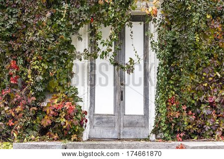 Old wooden door under plants outdoors. Abstract cover. Abstract background