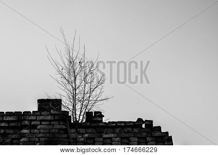 Lonly tree on the roof of the abandoned building (public property)
