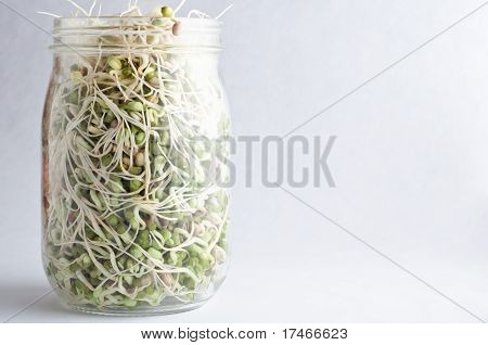 Beans Sprouting In Glass Jar