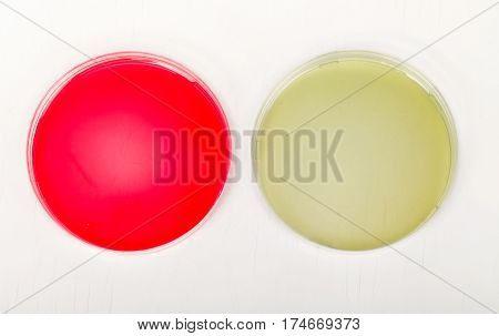 Petri dishes for medical research on isolated white background