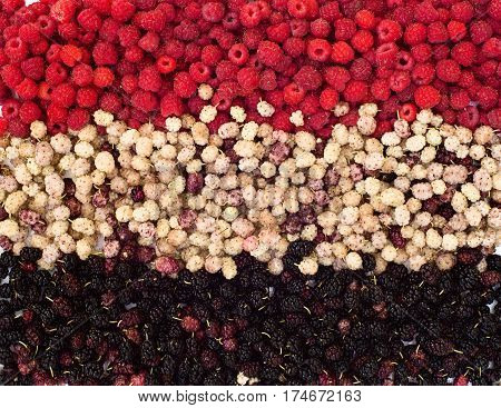 Various berries background. black mulberry, raspberry, white mulberry