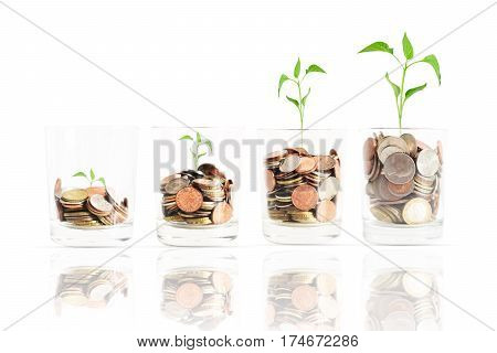 Ascending scale of financial revenues, or profit in agriculture concept with coins and green plant in jars