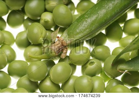 Fresh Raw Green Peas And Empty Pod On White Background