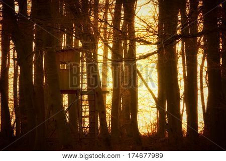 high seat in the dark woods photographed in the late afternoon