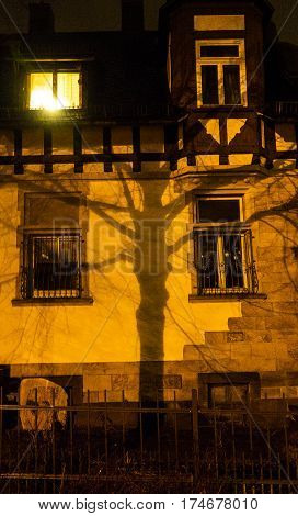 a tree casts a shadow on a nightly illuminated wall