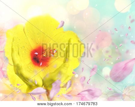 Background created with multiple exposure method showing a flower protected by human hands and many petals blown by the wind. Concept of nature care environmental conservation ecology.