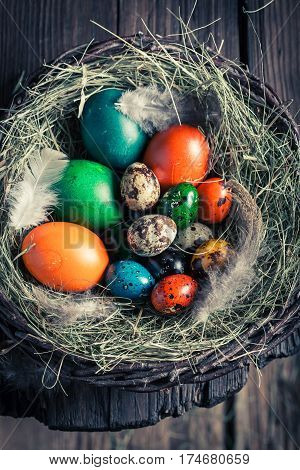 Quail And Hen Easter Eggs In The Rustic Cottage