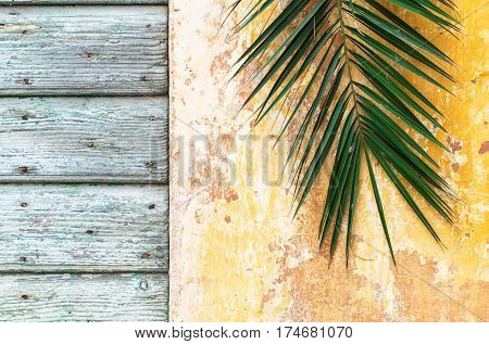 Palm branch on an old rough vintage wall and wooden door of historical house as Palm sunday and Jerusalem background and retro tropical concept lent