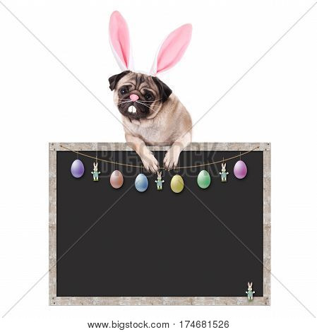 cute pug puppy dog with bunny ears diadem hanging with paws on blank blackboard sign with easter decoration on white background