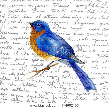 Bird of Spring eastern bluebird vector isolated on handwritten background