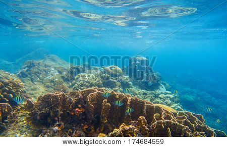 Underwater scenery with coral reef and tropical fishes. Blue sea view with marine fauna. Oceanic ecosystem. Beautiful undersea photo for banner template or background. Snorkeling in exotic seashore