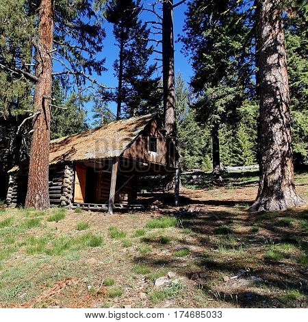 An old abandoned log cabin on a hill amongst pine trees in the Ochoco National Forest in Central Oregon on a sunny summer day.