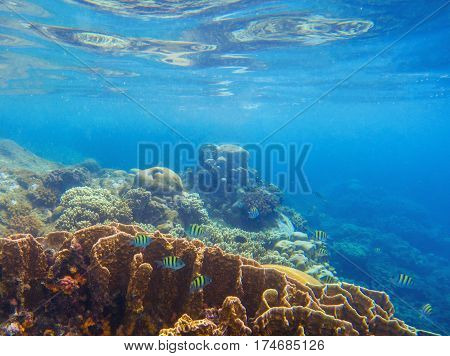 Seashore scenery with coral reef and tropical fishes. Blue sea view with marine fauna. Oceanic ecosystem. Beautiful undersea photo for banner template or background. Snorkeling in tropical lagoon
