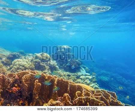 Undersea scenery with coral reef and tropical fishes. Blue sea view with marine fauna. Oceanic ecosystem. Beautiful underwater photo for banner template or background. Snorkeling in tropical seashore