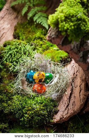 Various Eggs For Easter On Bark With Moss