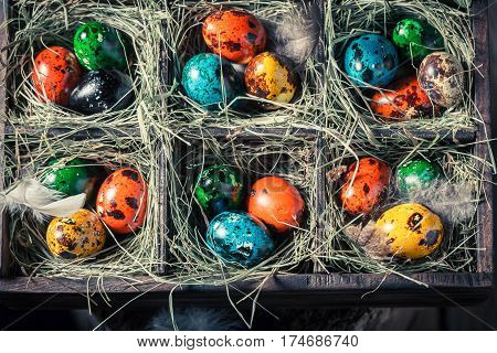 Quail And Hen Easter Eggs In The Box With Hay