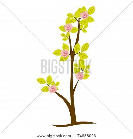 colorful ramification with roses nature design vector illustration
