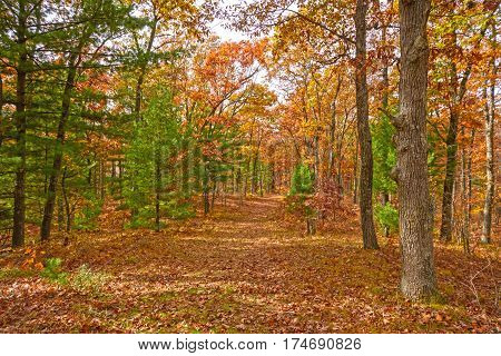 Fall Colors in a MIxed Forest in Black River State Forest in Wisconsin
