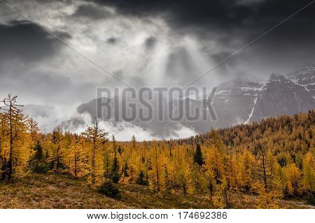Larch Valley In The Canadian Rockies