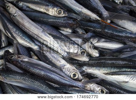 Mackerel fish on market table for sell. Sea mackerel on display. Raw sea food ingredient. Grey and silver fishes from fisherman's catch. Healthy seaside food ready for cook. Fresh mackerel closeup