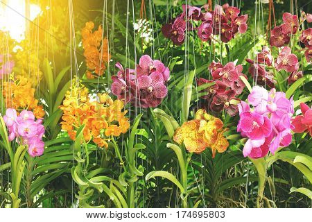 orchid flowers in flower market for sale