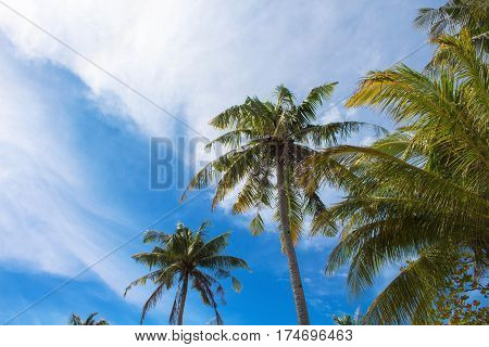Palm tree and cloudy sky tropical island photo. Sunny exotic summer card. Tropical island nature. Palm tree leaf on sky background. Fresh green palm tree crown for vacation or holiday banner template