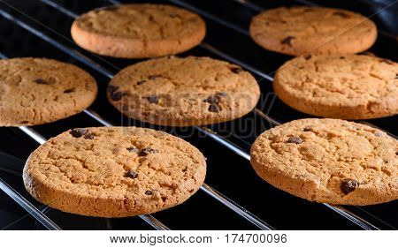 Homemade Chocolate chip cookies baking on rack in home oven. Close up selective focus