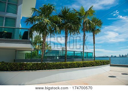 Palms near condominium building in Miami Downtown at sunny day