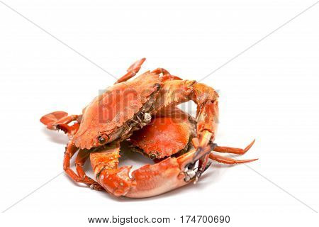 Red crab on white background. Cooked sea crab meat on white background. Red crab studio photo for restaurant menu. Fresh seafood for dinner. Healthy eating. Whole red boiled crabs.