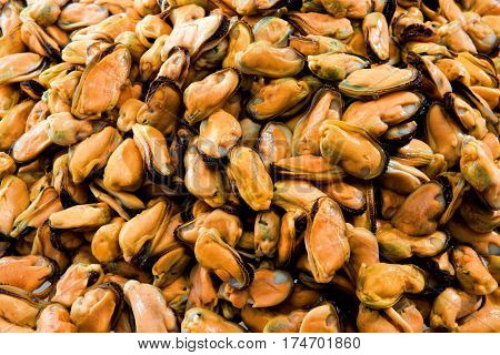 mussel new zealand Fresh food background yellow