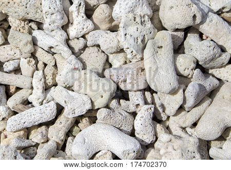 White coral pebbles texture. White corals on a wild tropical beach. Dead coral closeup photo. Image of seaside fauna after typhoon. Ecological disaster illustration. Coral reef destroyed by storm