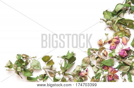 flowers composition. Frame made of dried rose flowers