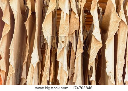Leather Drying In The Tannery. Fez, Morocco