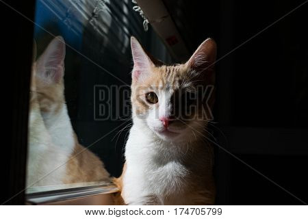 Cat sitting up looking at viewer sitting next to window