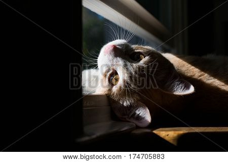Cat laying down on window looking at viewer