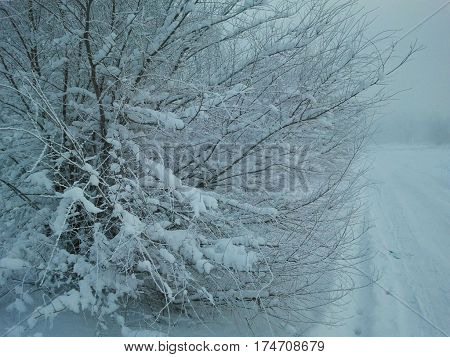 Snow-covered road. Wet snow flakes adhered on the branches of bushes. winter beauty.