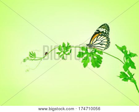 the green creeping plant with butterfly and ladybug on green background