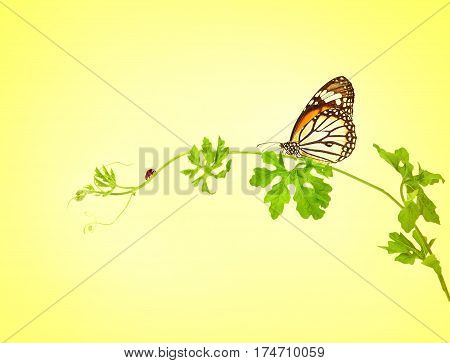 the green creeping plant with butterfly and ladybug on yellow background