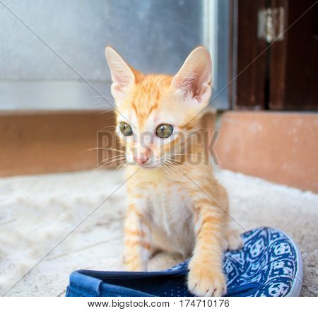 Small red kitten plays with shoe. Outdoor life of domestic cat. Feline baby portrait with curious sight. Naughty kitten steal sandal. Lovely orange kitty. Domestic pet exploring outdoor. Lovely animal