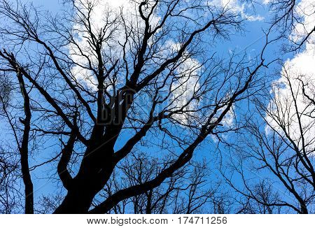 Naked Branches Of Treetop On Sky Background In Spring