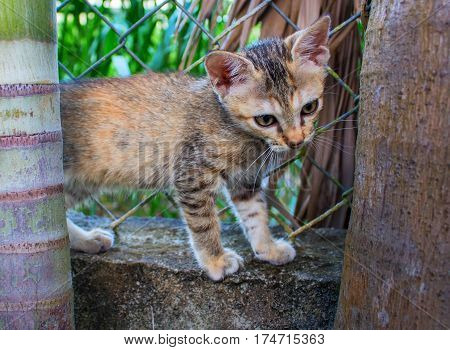 Small kitten in the garden. Young cat plays outside. Orange and brown fluffy kitty climbs the fence. Domestic pet walks outside in summer. Lovely kitten stands on fence. Cute kitty exploring nature