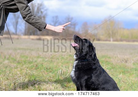 Young Woman Teaching Her Black Dog Obedience