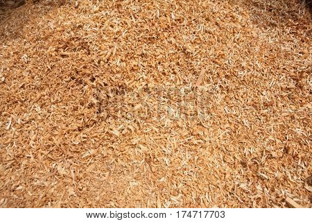Teak Wood Sawdust Texture Background in  timber