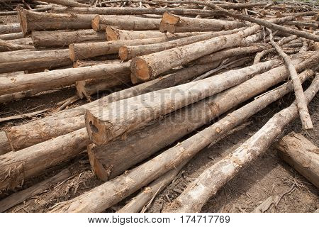 Stacked of teak tree wood logs background