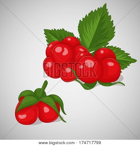 Bright juicy stone bramble on grey background. Sweet delicious for your design in simple cartoon style. Vector illustration. Berries Collection.