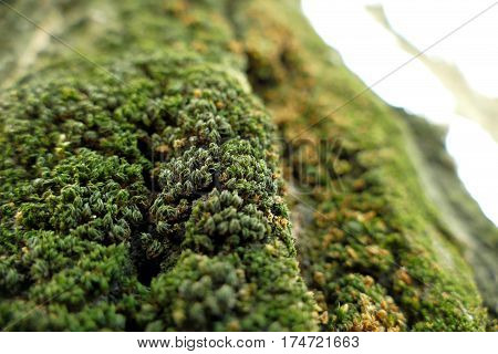 Moss On A Tree Macro Shot