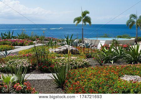 Dream travel destination all year - Caribbean region, Curacao island blue sea and colorful flowers palm trees