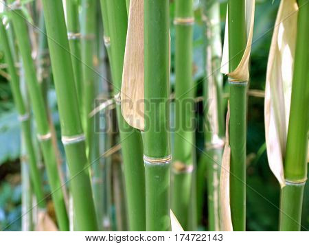 Peaceful green bamboo forest in soothing. Zen concept.