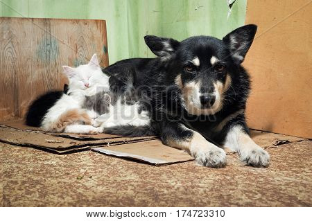 Stray dog and kittens. Dirty corner of the barn torn cardboard